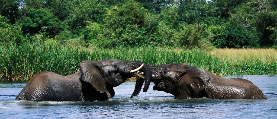 Elephants at Murchison Falls National Park. Courtesy Photo
