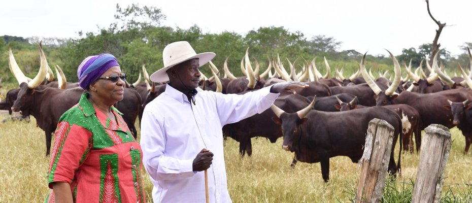 President Museveni and Namibia Deputy Premier at Kisozi Farm. PPU photo